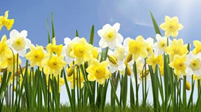 Health and Well-being in Early Spring